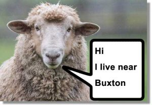 sheep_talk